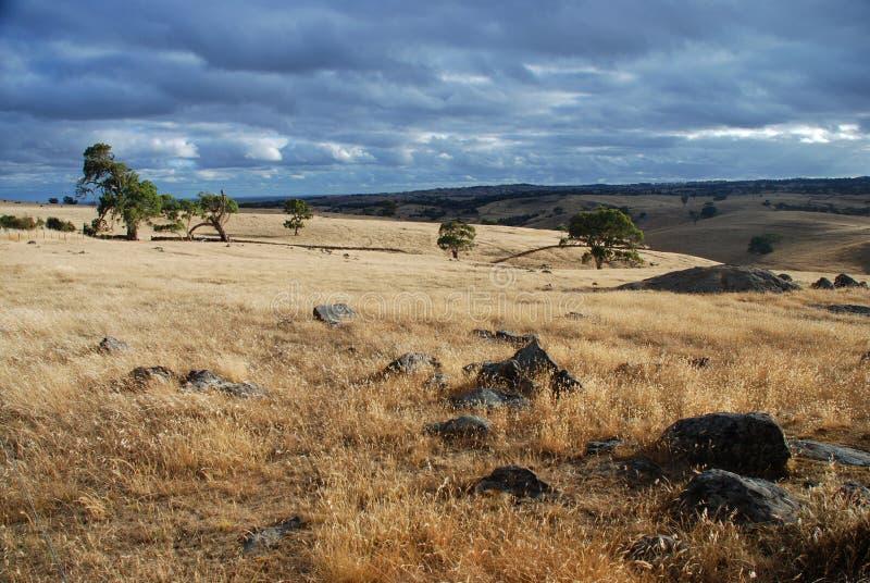 McLaren Vale Landscape. South Australia. Australia Stock Photo ...