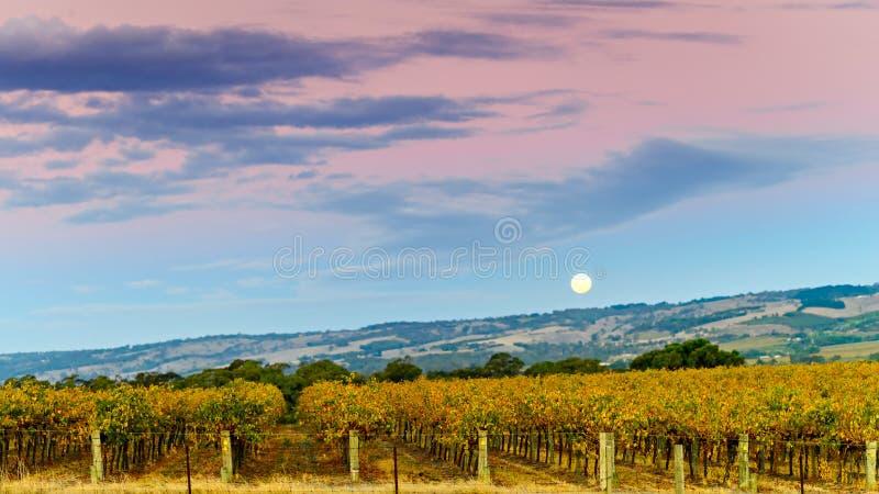 McLaren Vale Winery Moon Rise Stock Image - Image of farmland ...