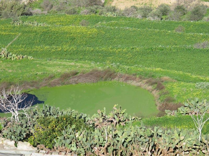 Mdina Malta fotos de stock
