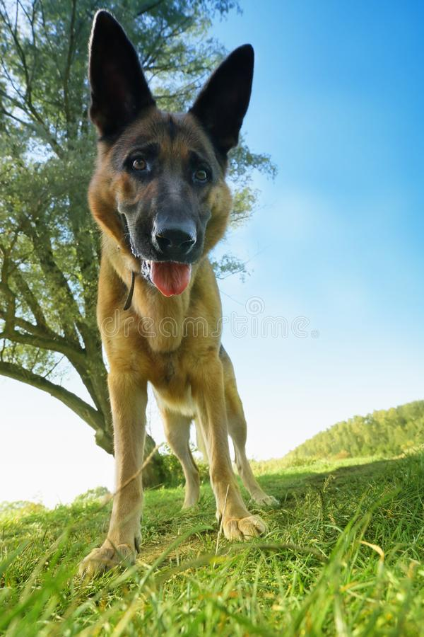 It is me - Dog stock photography