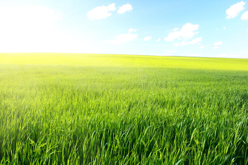 Download Meadow stock image. Image of grass, rural, nature, earth - 12660983