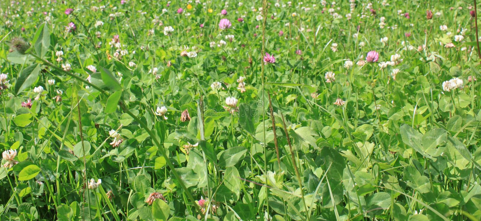 Download Meadow stock photo. Image of floral, natural, beauty - 21116698