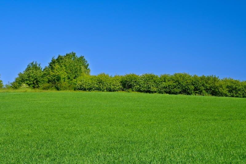 - meadow zdjęcie royalty free