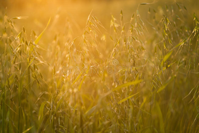 Download Meadow Stock Photo - Image: 25378370