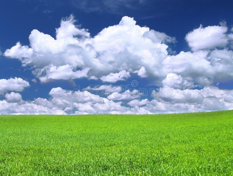 - meadow obrazy stock