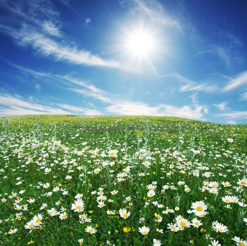 Download Meadow stock image. Image of countryside, sunny, nature - 4221585