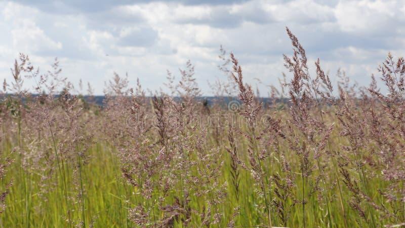 meadow fotografia stock