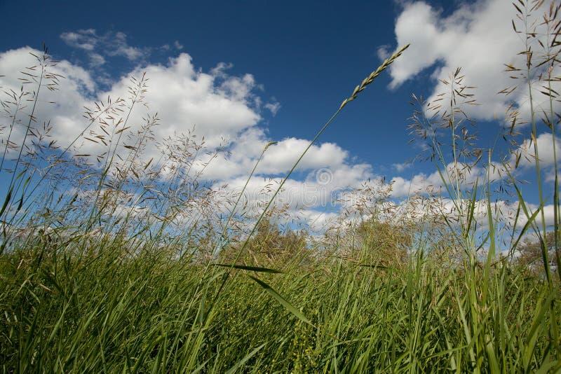 meadow obrazy royalty free