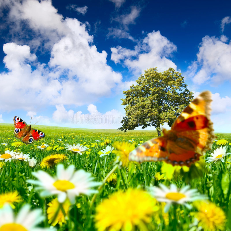 Free Meadow Stock Images - 8853734