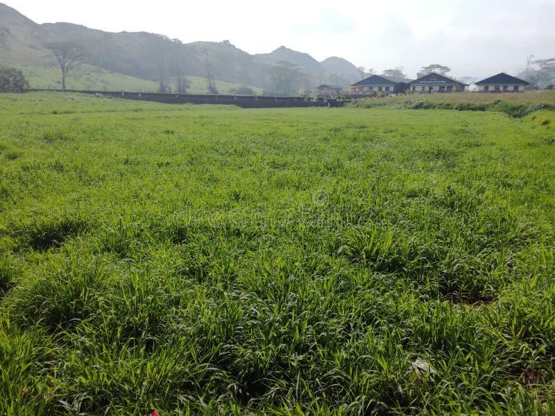 meadow obrazy stock