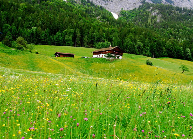 Meadow in the alps stock image