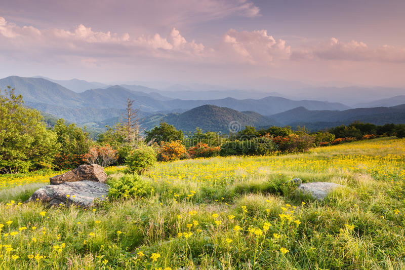 Meadow Appalachian Trail Western North Carolina. A meadow filled with golden ragwort, also known as Schweinitz's Groundsel, is located at Engine Bald off royalty free stock image