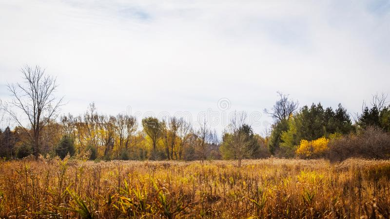 Meadow in the autumn season. Meadow in the autumn; orange, yellow and green displayed in the trees and grasses; warm fall day stock images
