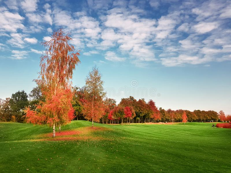 Meadow in autumn park, landscape in sunny day stock photography