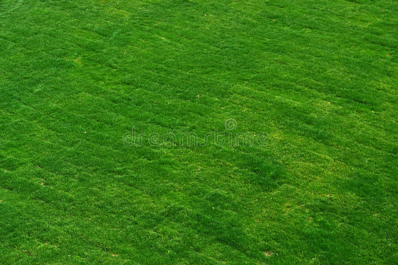 Meadow background stock image