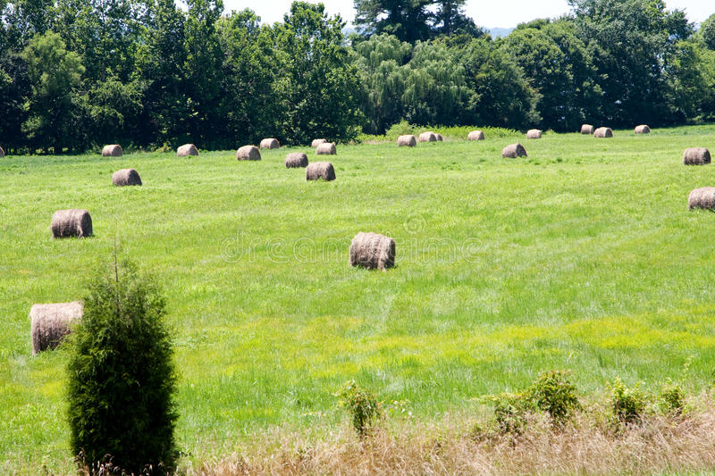 Download Meadow with bales of hay stock image. Image of food, agricultural - 10091235