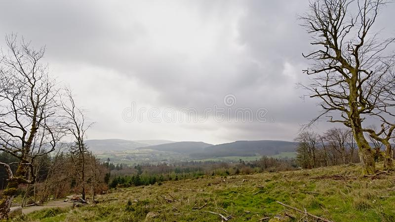 Meadow with bare trees and foggy spruce forest and mountians on Montpelier hill,  Dublin royalty free stock images