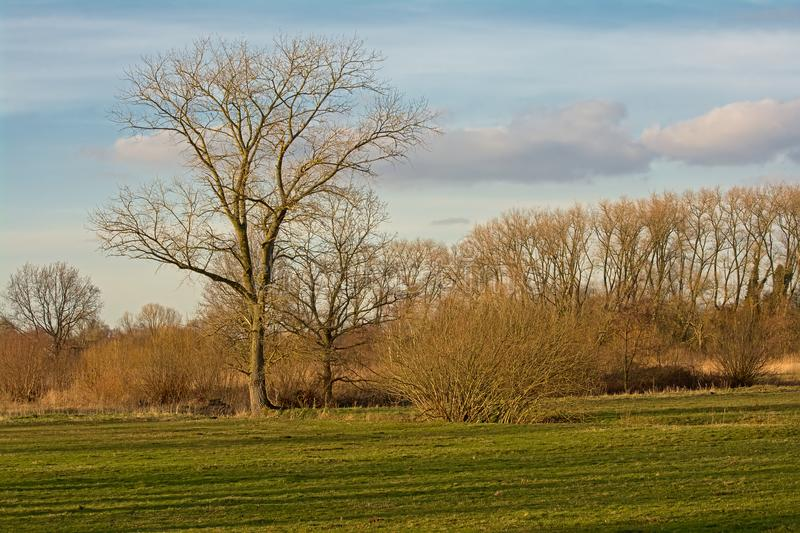 Meadow with bare winter trees in a sunny marsh stock image