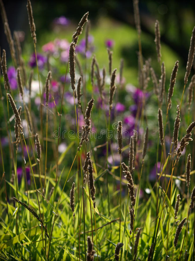 Meadow bent stock images