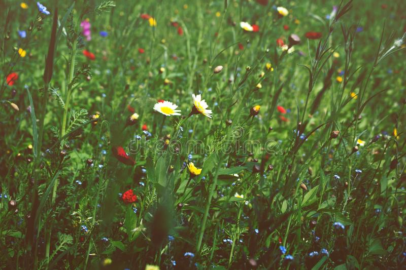 Meadow in bloom stock photos