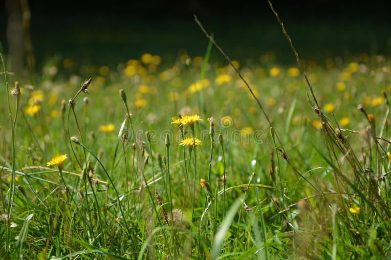 Meadow with blooming flowers stock photos