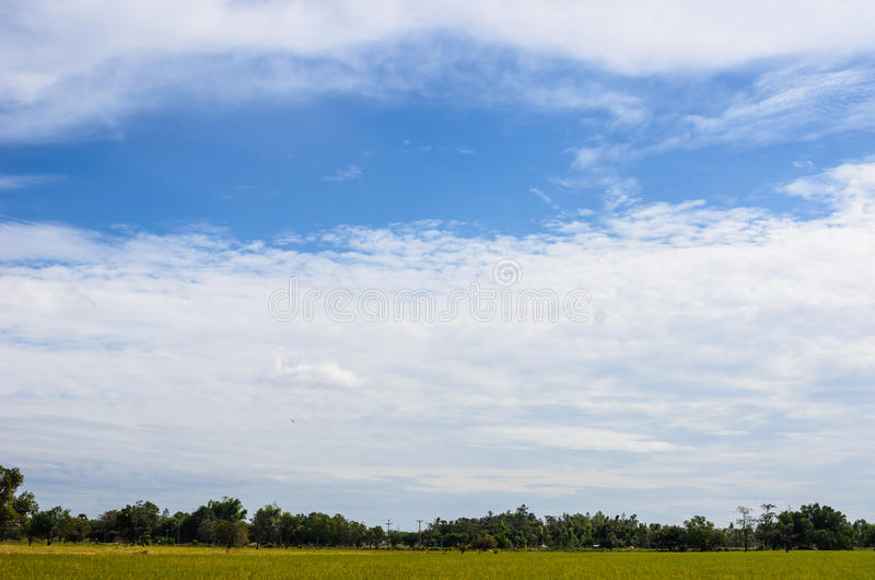 Meadow And Blue Sky Stock Image