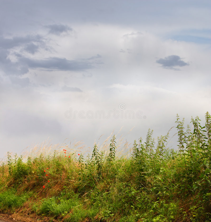 Download Meadow and blue sky stock photo. Image of blue, cloudy - 2743978