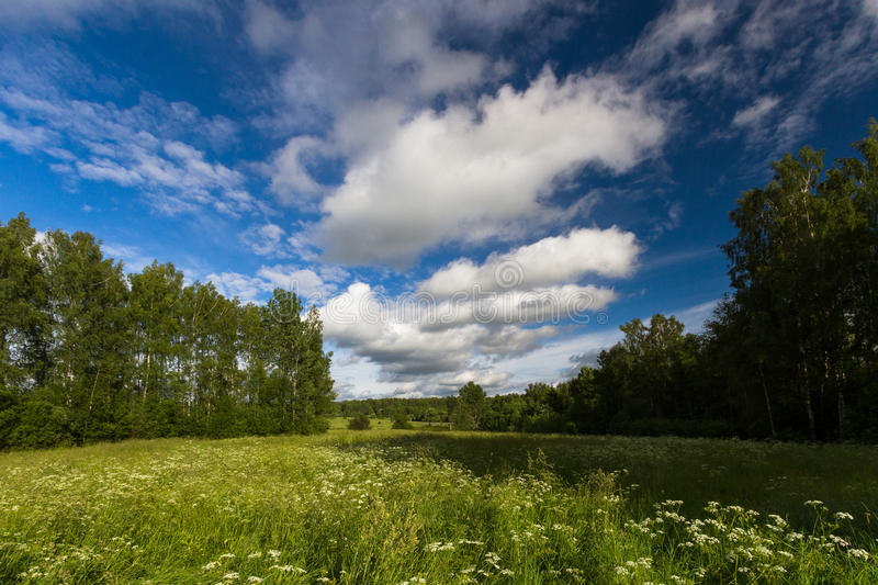 Meadow with clouds. In summer day stock images