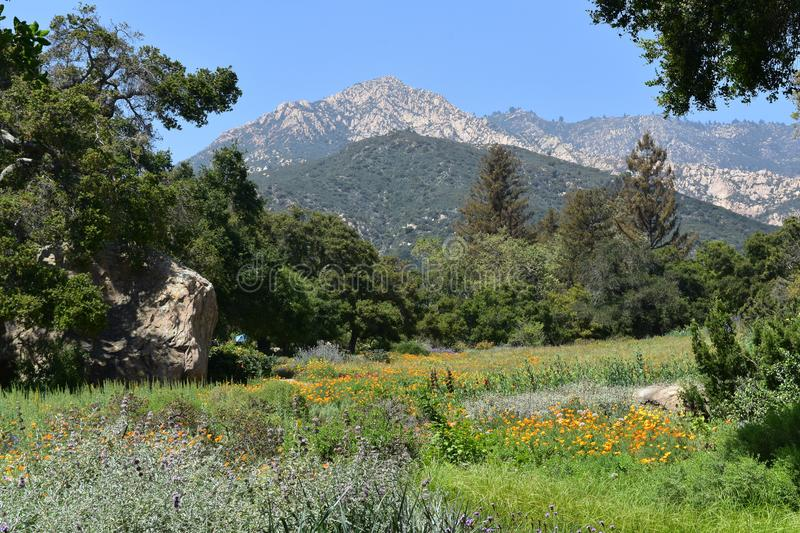 Meadow with Colorful Flowers Growing in the Santa Barbara Foothills. California foothills with a lush meadow and field with wildflowers royalty free stock photography