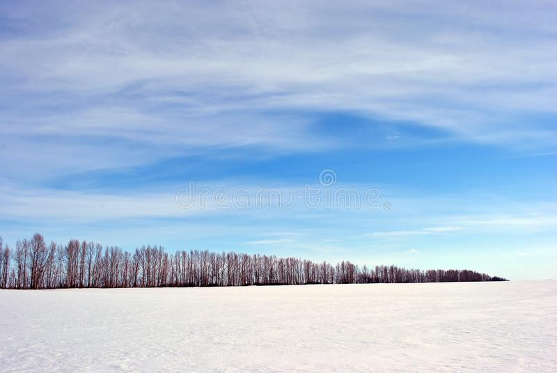 Meadow covered with snow, trees line without leaves, blue cloudy sky. Background royalty free stock image