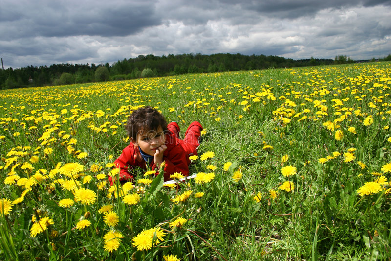 Meadow and dandelions. stock image
