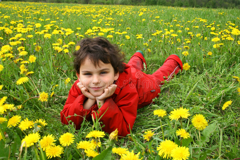 Meadow and dandelions. stock photo