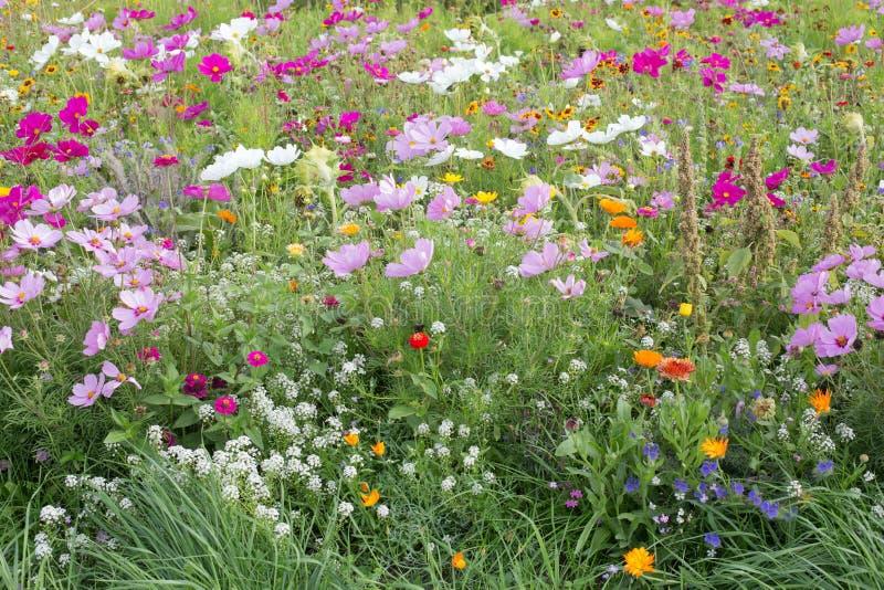 meadow dziki kwiat obrazy royalty free