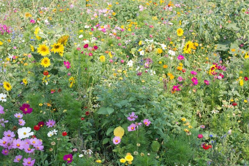 meadow dziki kwiat fotografia royalty free