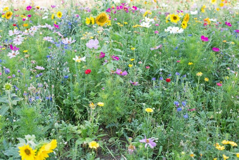 meadow dziki kwiat fotografia stock