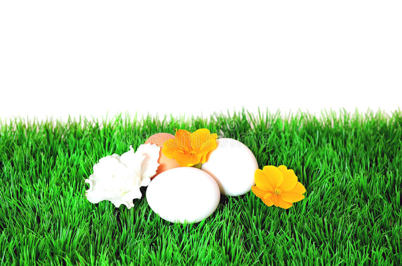 Download Meadow Easter egg stock image. Image of flower, easter - 24099369
