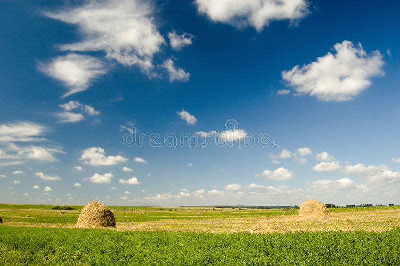 Meadow in Europe royalty free stock image