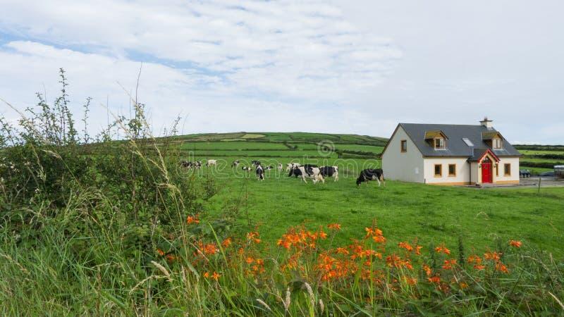Meadow with farm animals stock photo