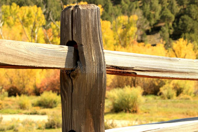Download Meadow Fenceline stock image. Image of sticks, grass - 45654941