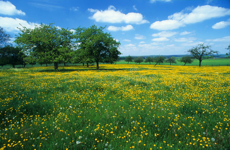 Download Meadow with flowers 3 stock image. Image of yellow, trees - 2585957