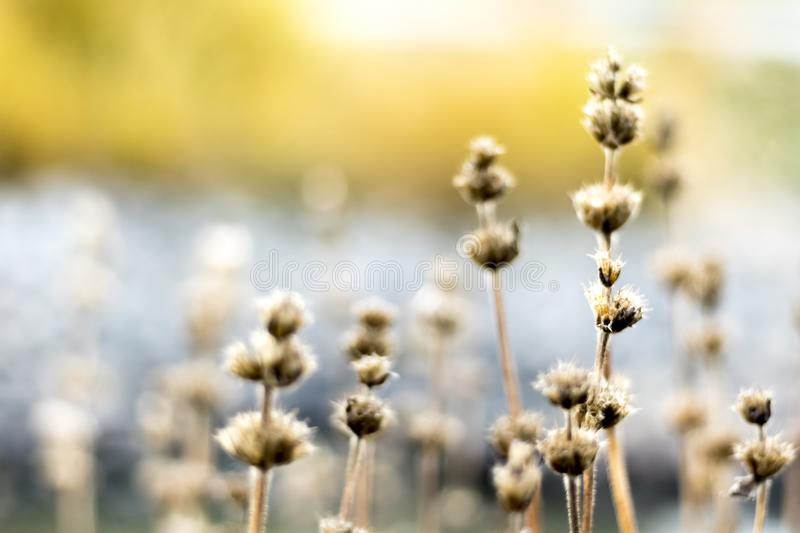 Flowers in autumn royalty free stock photo
