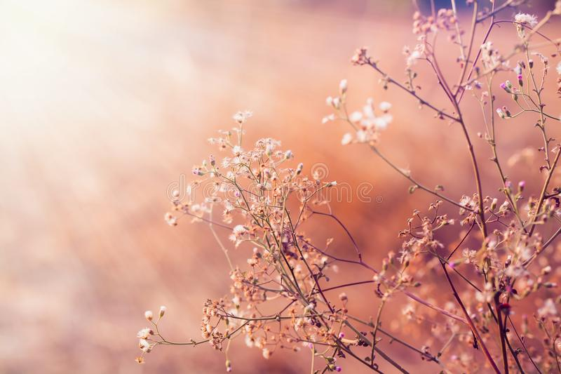 Meadow flowers, beautiful fresh morning in soft warm light. Vintage autumn landscape blurry natural background. stock photo