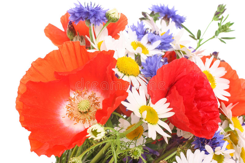 Meadow flowers, corn poppies with cornflowers and marguerite. Bunch of flowers with corn poppy blossoms and marguerites, isolated stock photos