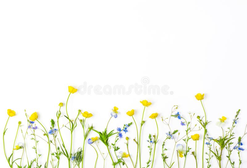 Meadow flowers with field buttercups and pansies isolated on white background. Top view with copy space. Flat lay royalty free stock photography