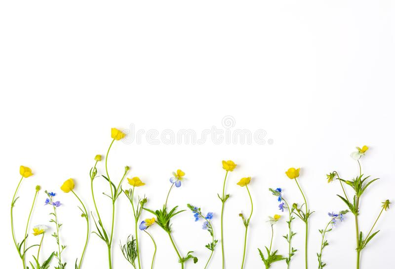 Meadow flowers with field buttercups and pansies isolated on white background. Top view. Flat lay. Meadow flowers with field buttercups and pansies isolated on stock photo