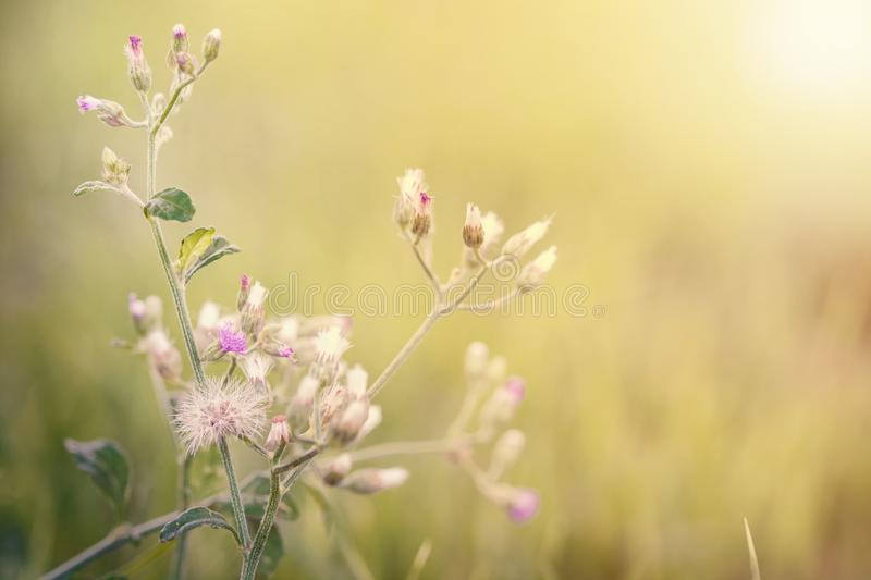 meadow flowers in soft warm light. Vintage autumn landscape blur royalty free stock images