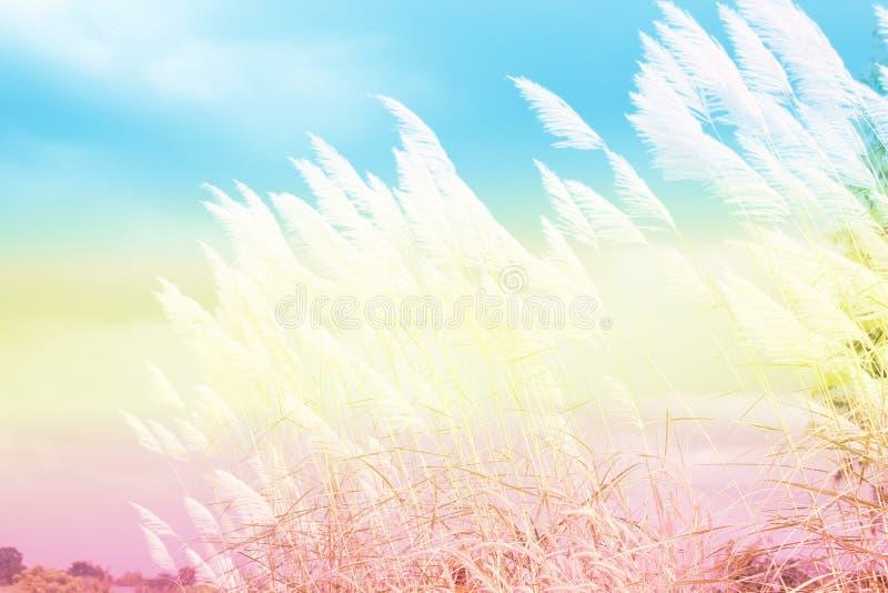 Meadow flowers in the sunlight. Beautiful winte stock photos