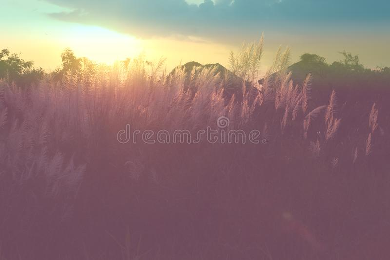 Meadow flowers in the sunlight evening. vintage winter. royalty free stock photography