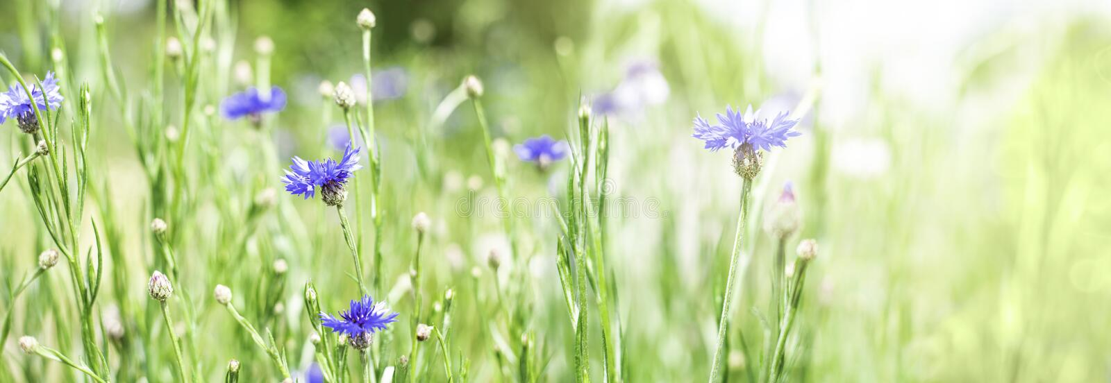 Meadow flowers on a sunny summer day. royalty free stock photography