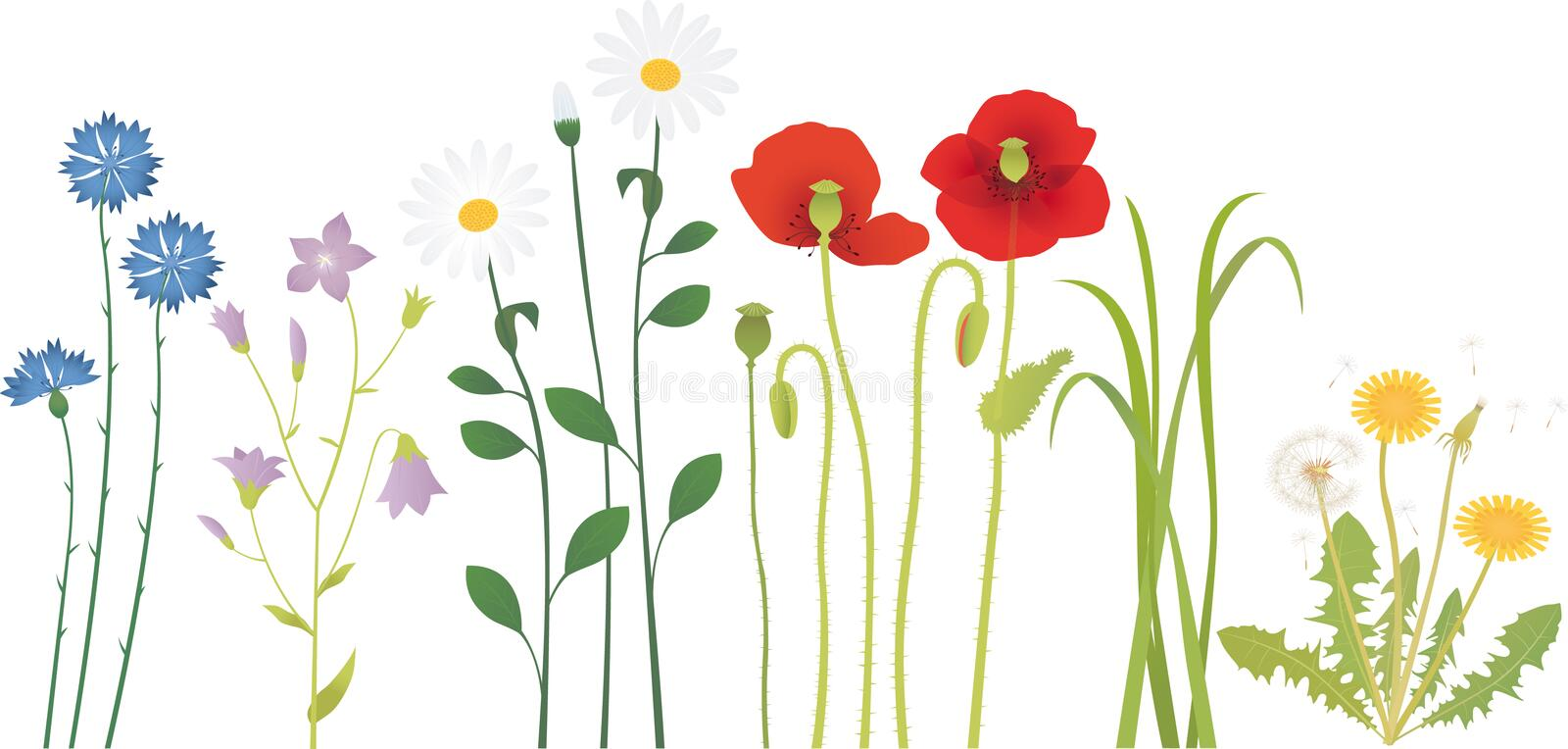 Meadow flowers stock illustration